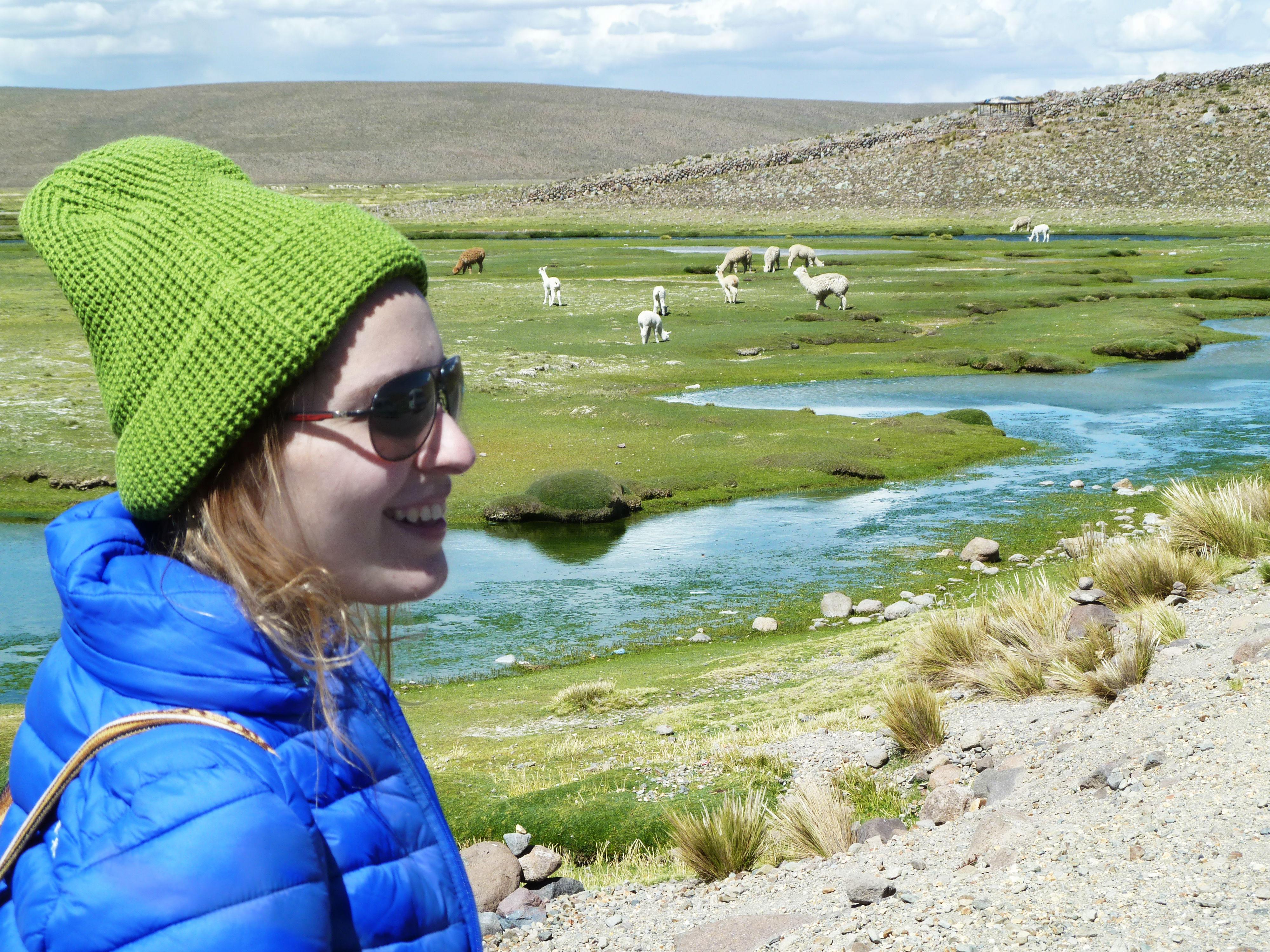 alpacas maravilhosas