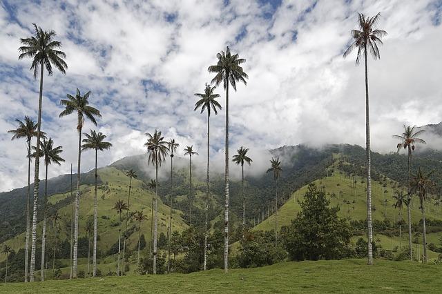 lugares mais bonitos da colombia para conhecer vale de cocora salento.jpg