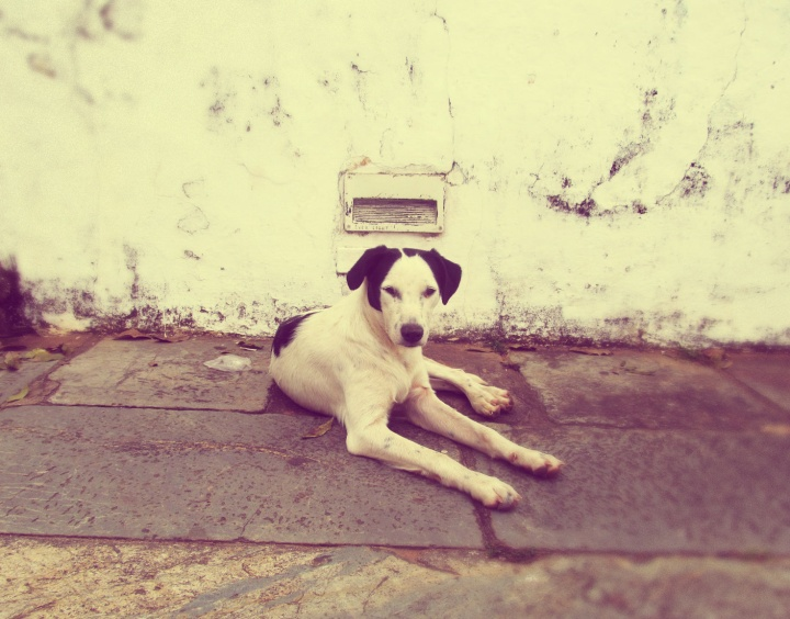 cachorro alfafa em Tiradentes.jpg