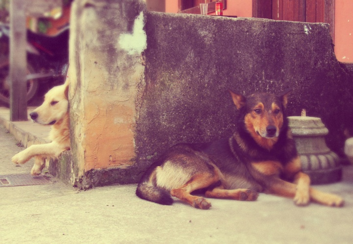 Cachorros em Bichinho Minas Gerais.jpg