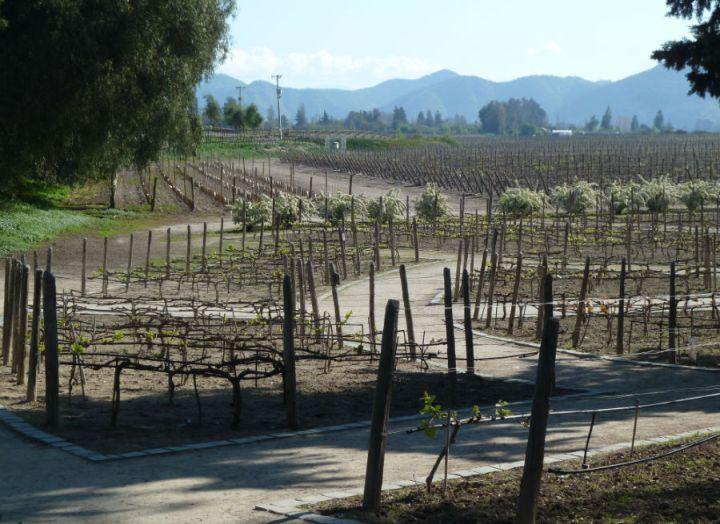 vinicola concha y toro no final do inverno santiago de chile