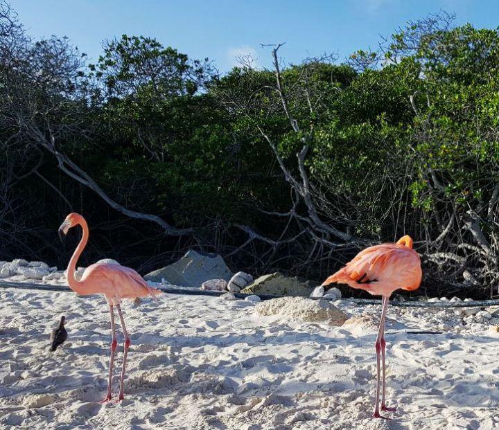 praias mais bonitas de aruba flamingo beach dicas
