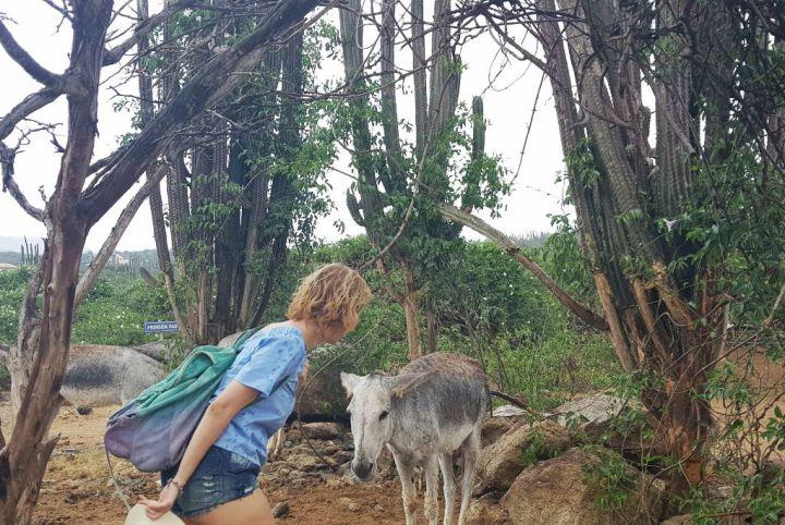 donkey sanctuary dicas o que fazer em aruba alem de praia.jpg