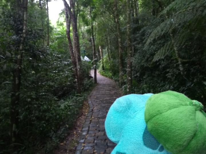 curitiba no carnaval bosque do papa.jpg