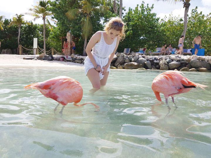 flamingos em aruba como tirar foto com eles